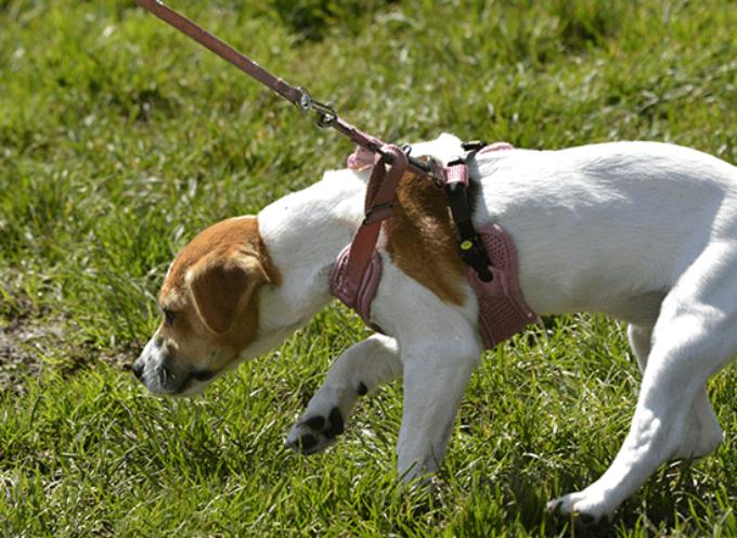 Kako naučiti psa da ne vuče na povocu