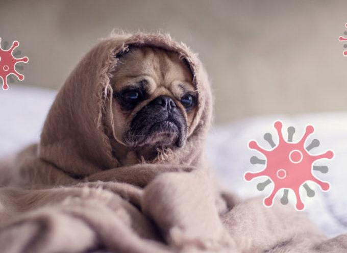 Psi i mačke NE MOGU da prenesu COVID-19 na ljude